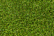 Avocado Turf